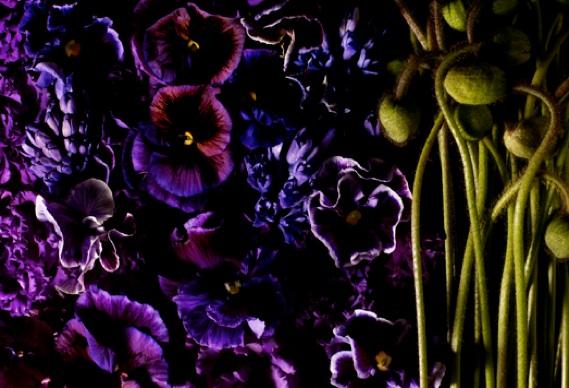 encyclopediaflowers388_0.jpg - Encyclopedia of Flowers - 4911