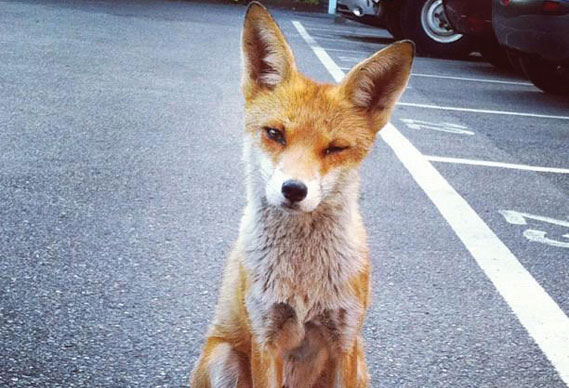 foxy_0.jpg - We want your #bestinstagramshot - 4903