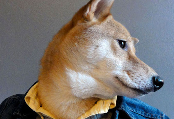 contentsdog_0.jpg - Menswear Dog - 5060