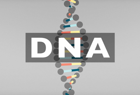 dna_knowledge_dna_01_569_0.jpg - DNA explained - 5157