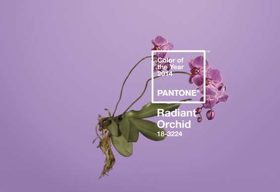 radiantorchid_0.jpg - Pantone's Colour of the Year - 5940