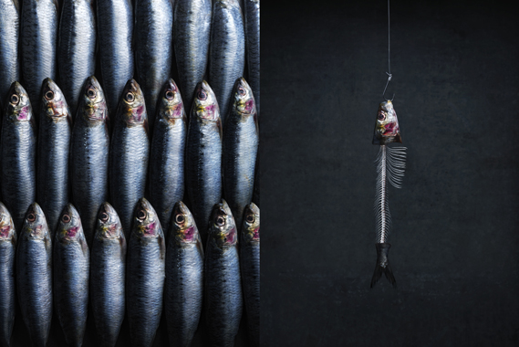 Photo of Cornish sardines by Jonathan Gregson for Cereal