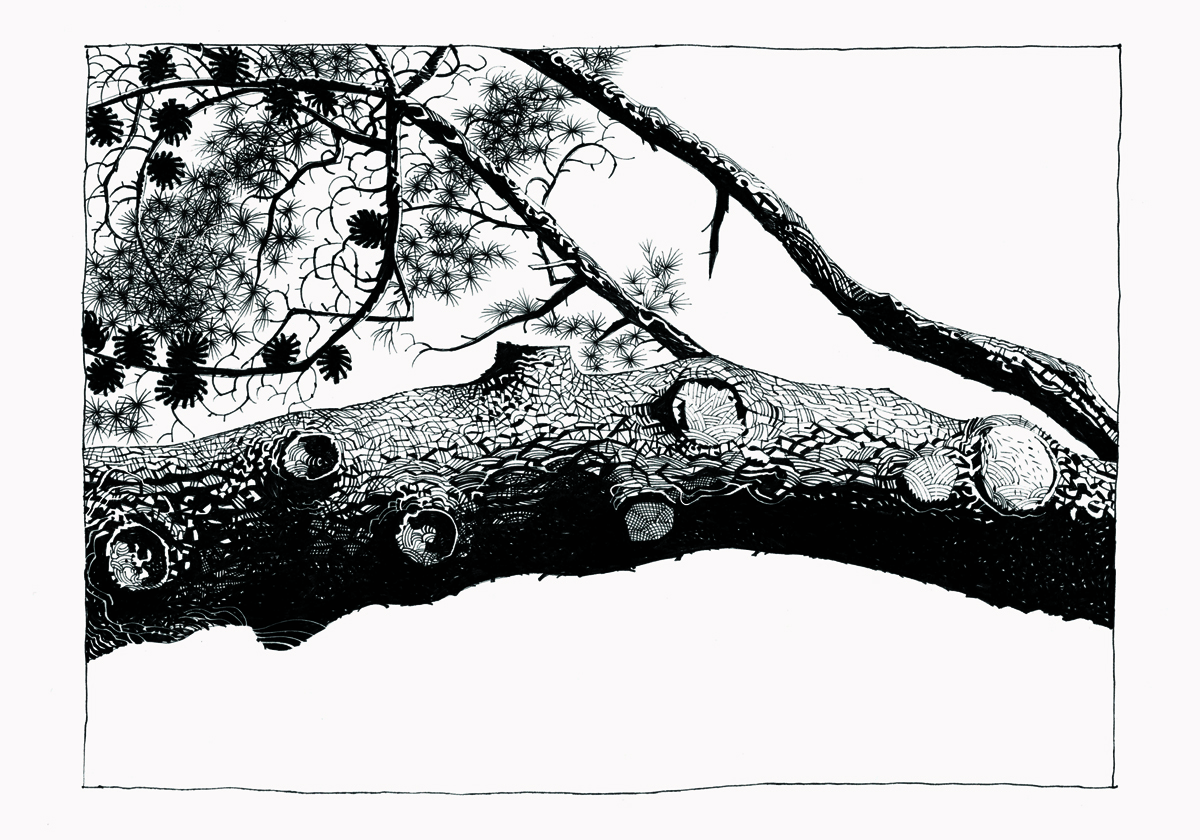 pine.24 copy