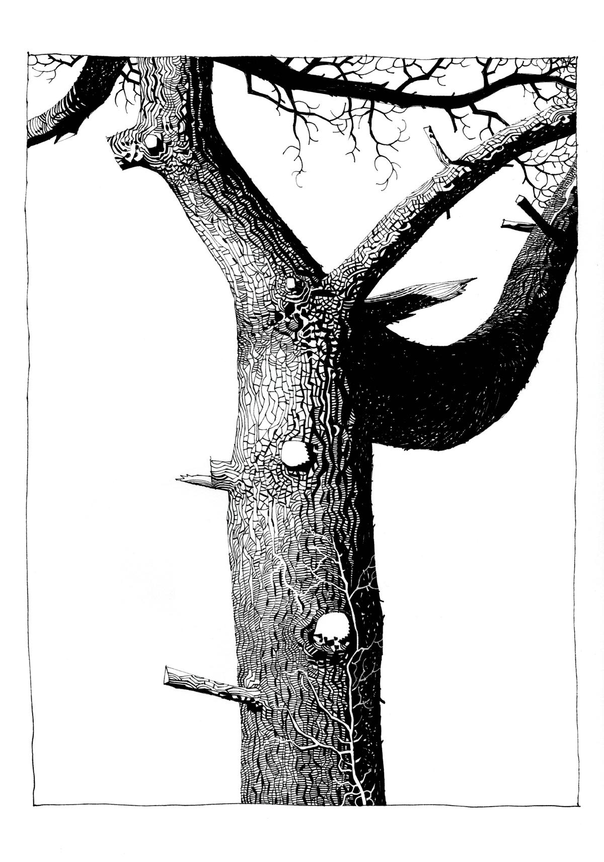 pine.27
