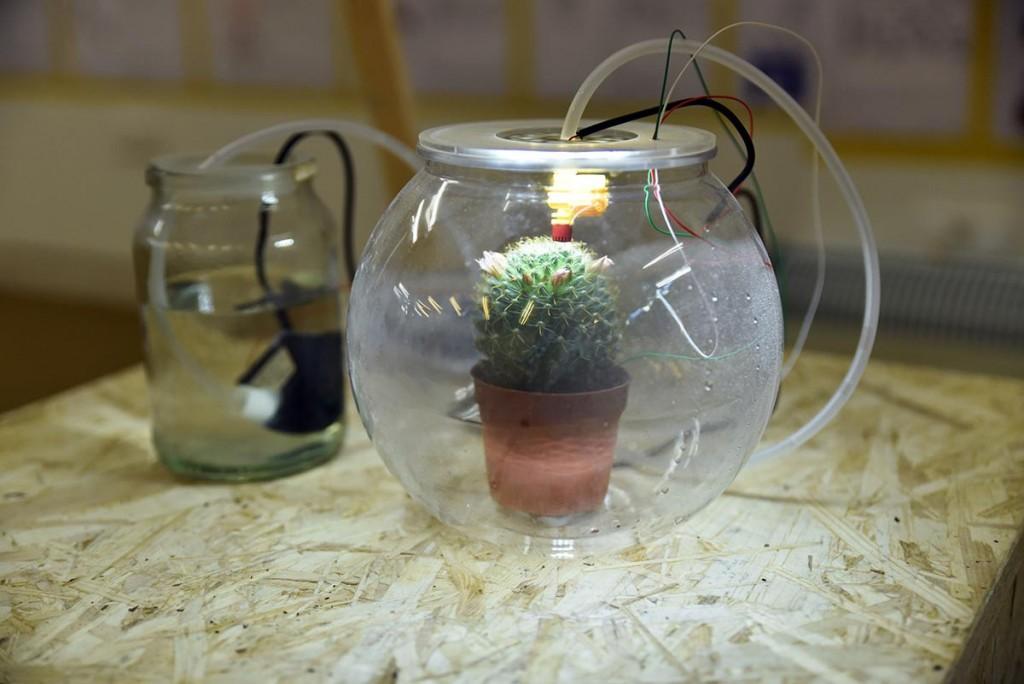 plant-2-1