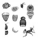 02_Bee-Bitss-Drw_01