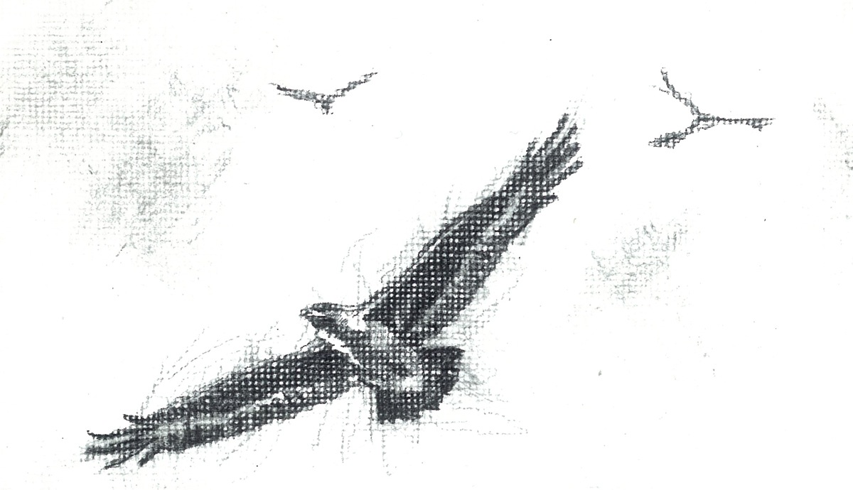 Bird drawing in pencil by Polly Jean Harvey. Used repeatedly as part of the montaged drawing that is the cover of Let England Shake (2011)