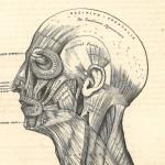 Grays-1st-ed-head-blog
