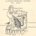 Teeth-Grays-1st-ed-blog