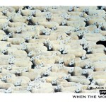 BBH Levi's ad featuring one black sheep among many white sheep