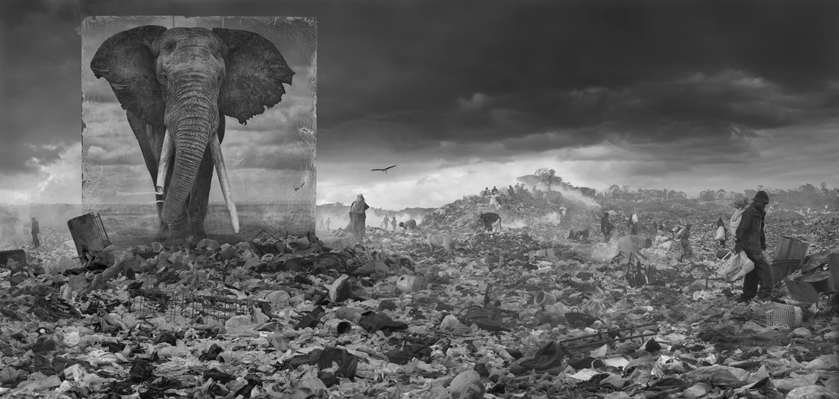 Wasteland with Elephant, 2015, © Nick Brandt, Courtesy Atlas Gallery