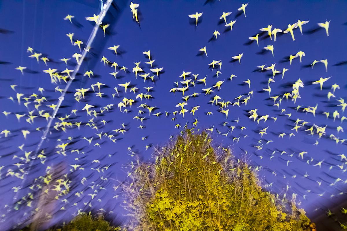 From Tokyo Parrots by Yoshinori Mizutani