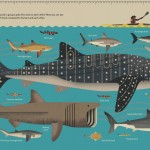 11-Smart-About-Sharks-Owen-Davey-Whale-Kayak-Scale_1000-1