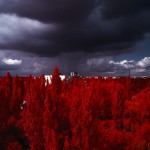 storm approaching Pripyat from The Red Forest. (2012). Exclusion Zone, Chernobyl. 120mm CIR Photograph.