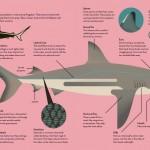 6-Smart-About-Sharks-Owen-Davey-Science-Biology_1000