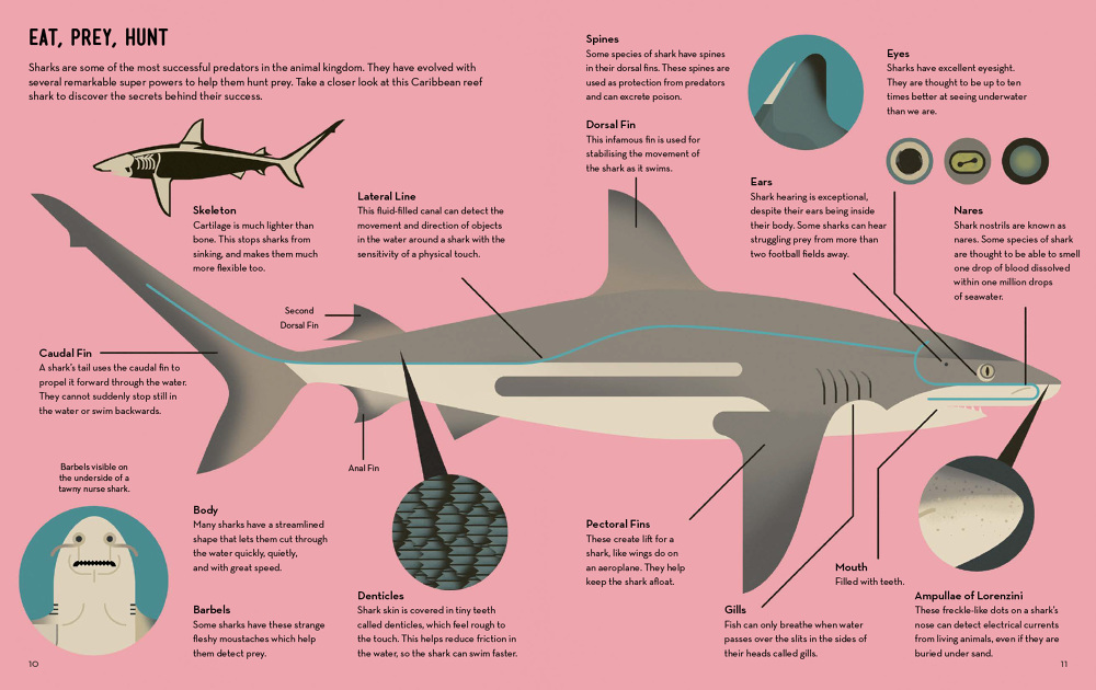6-Smart-About-Sharks-Owen-Davey-Science-Biology_1000