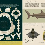 7-Smart-About-Sharks-Owen-Davey-Basking-Ray-Teeth-Jaws_1000