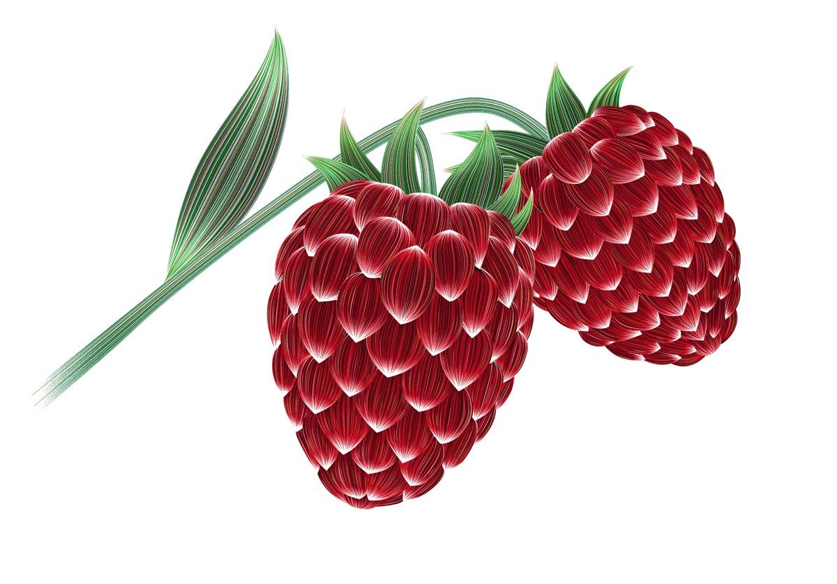 Raspberry-temptation-2000-CRsite