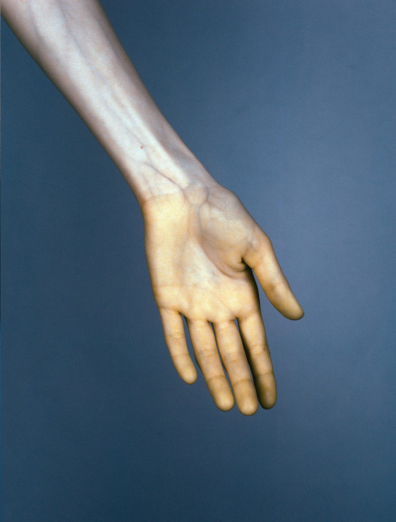 "Hand #6 from The Vein. (2015). 120mm CIR Photograph. In this series Thompson uses historic medical photography techniques, which present a ""hyper-real"" nudity by making the skin appear thinner and the veins more pronounced."