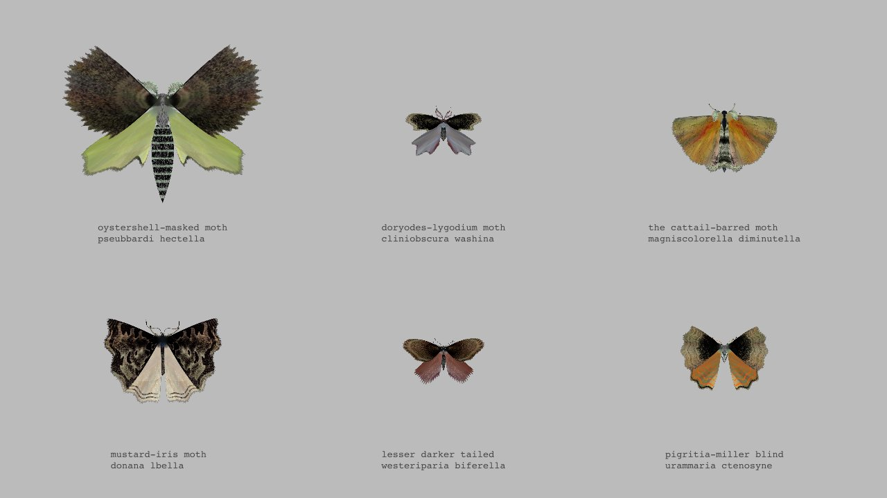 interactive twitterbot the Moth Generator