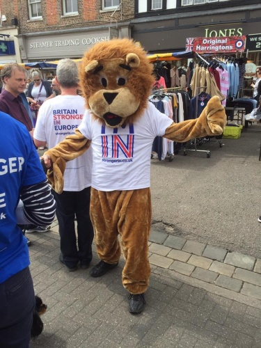 The StrongerIn lion out and about