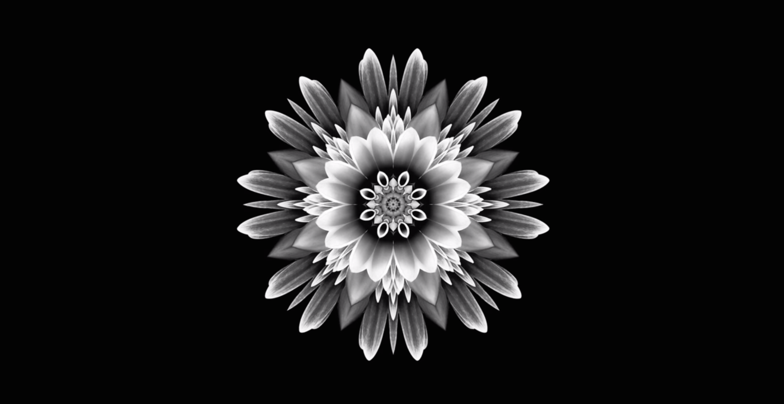 A kaleidoscopic flower device created for digital screens and window displays at funeral directors A.B. Walker's branches. The symbol moves slowly at the speed of a clock