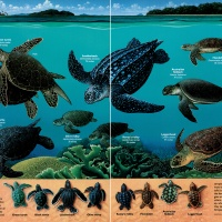 Sea turtles, February 1994. © National Geographic Partners, LLC All rights reserved NATIONAL GEOGRAPHIC and Yellow Border Design are trademarks of the National Geographic Society, used under license