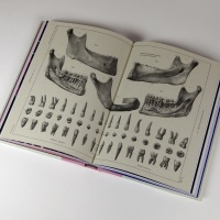 Pages from The Smile Stealers