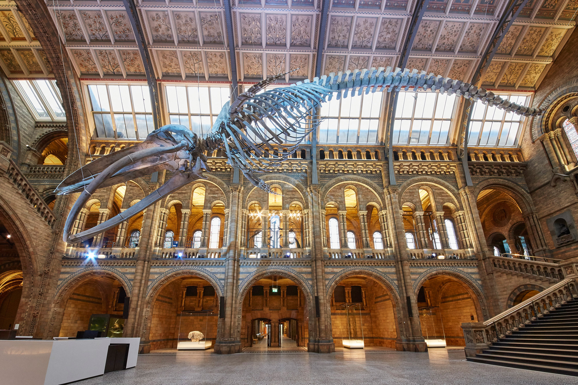 D Exhibition Uk : Blue whale at heart of natural history museum redesign