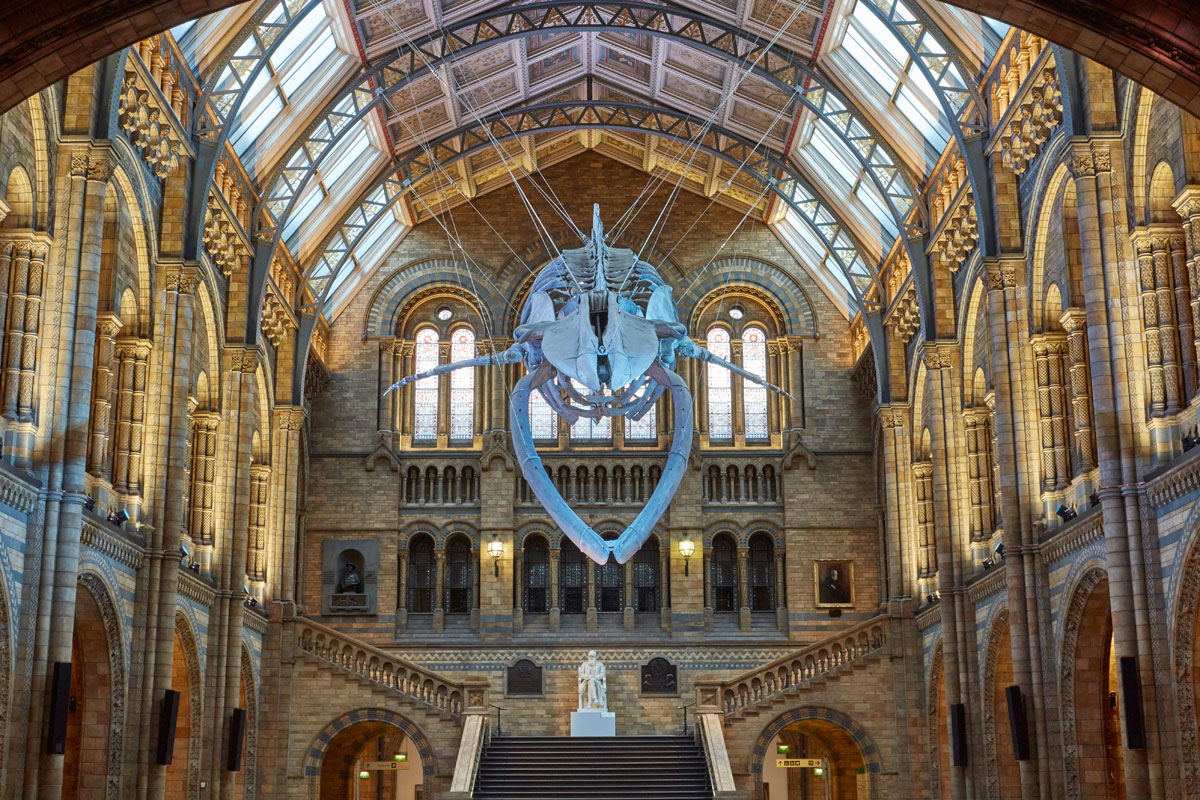 Foyer Museum Uk : Blue whale at heart of natural history museum redesign