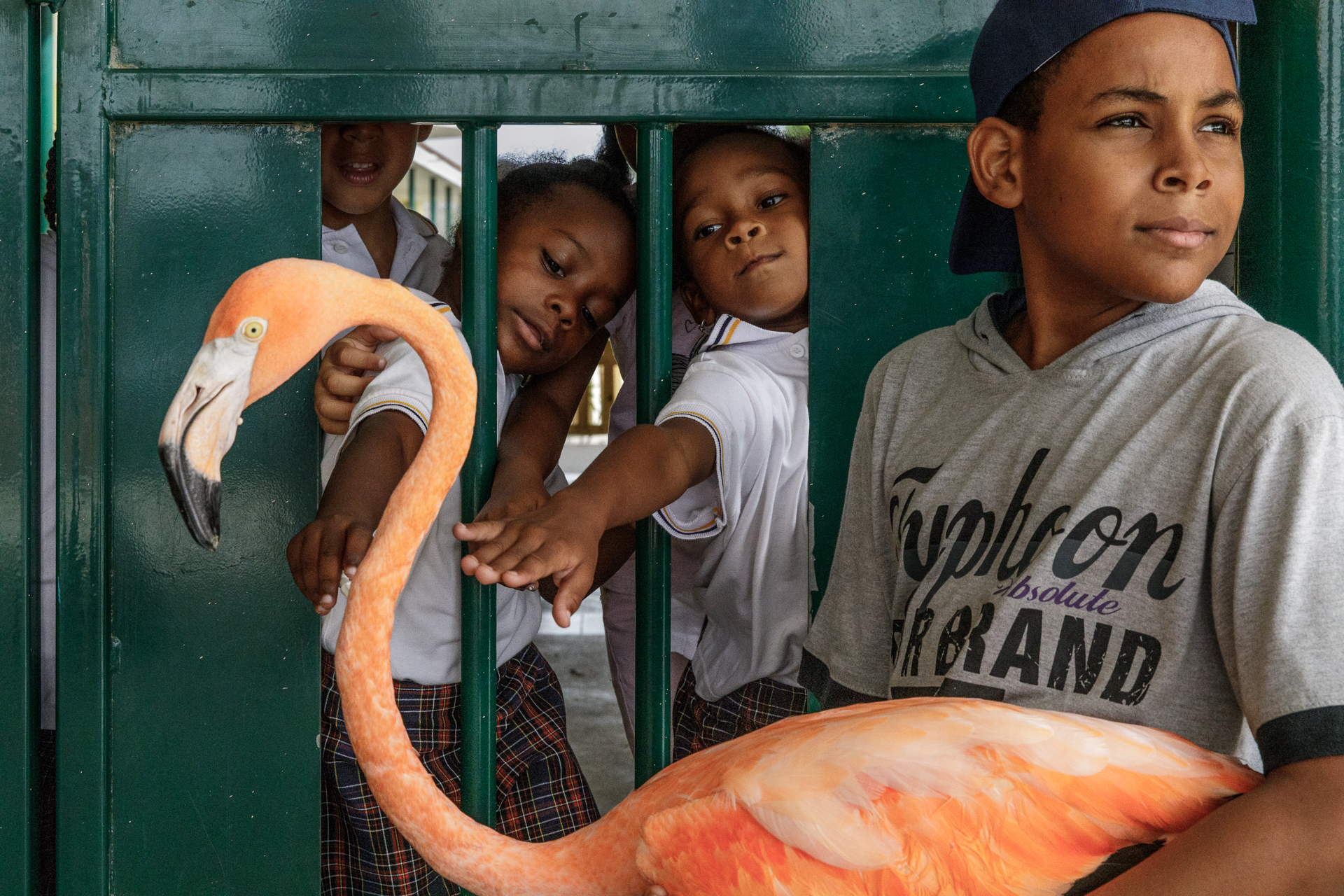 Photographing the Unlikely Rise of Bob the Flamingo