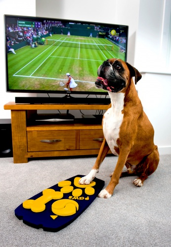 Rocky the Boxer tests a prototype of the first ever dog remote control (2)
