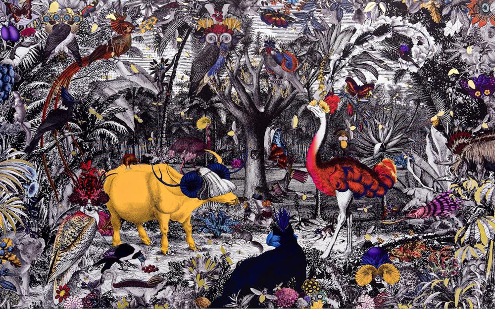 Gull Latinu Amerika, by Kristjana Williams