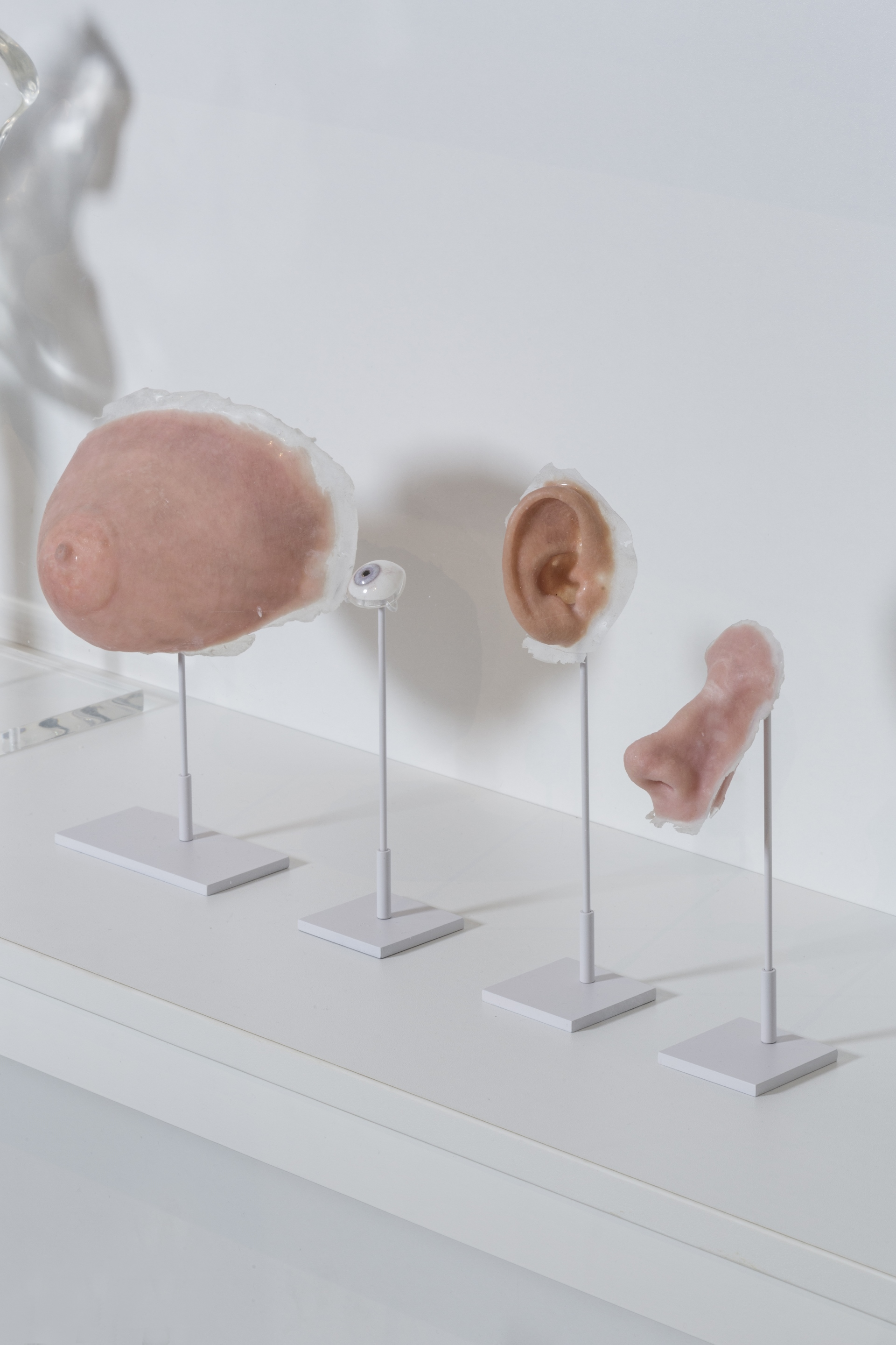 Medical prosthetics -breast, eye, ear, nose by Fripp Design & Research. Photo © Museums Sheffield