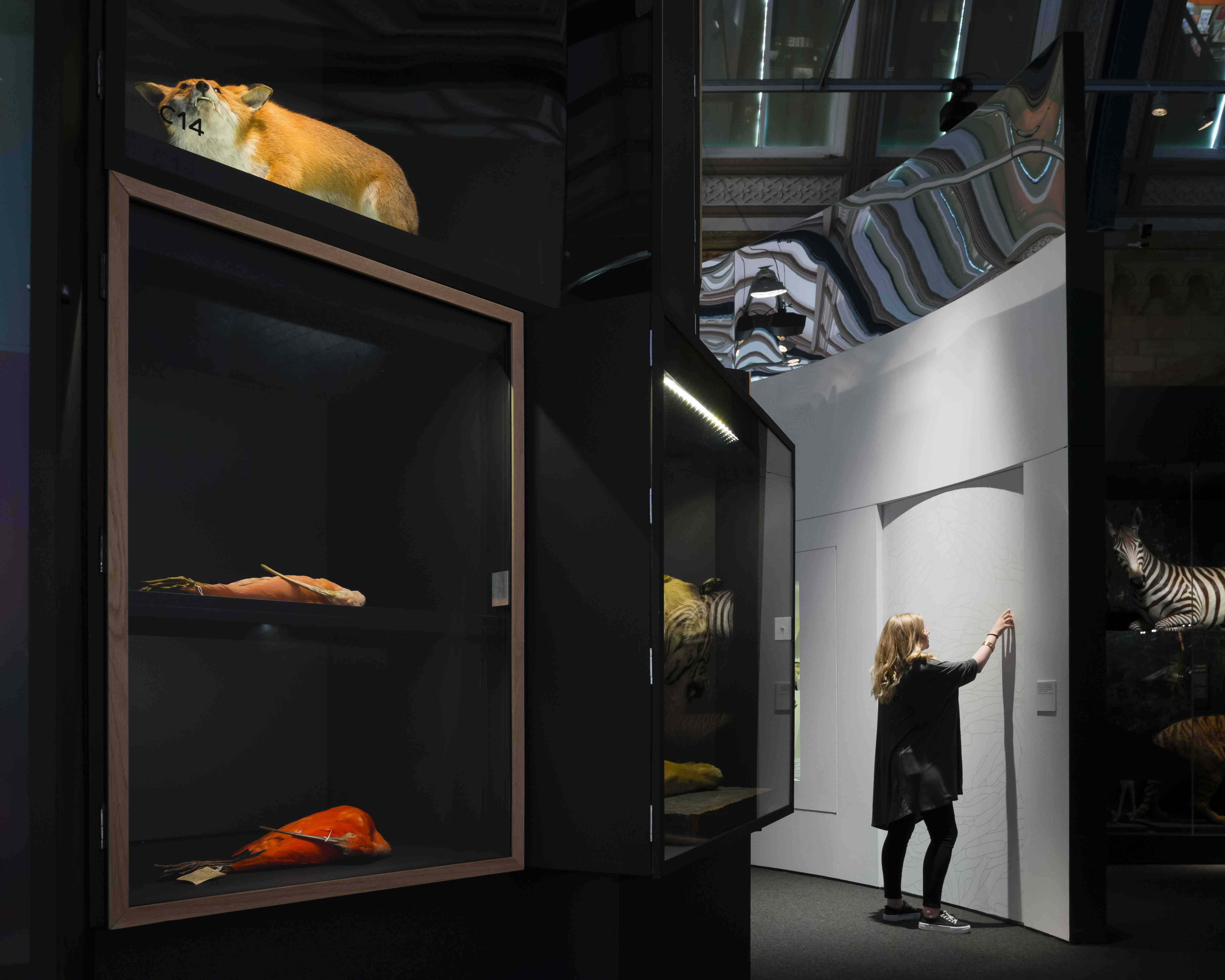 3f9c0bfed4106f A look at the Natural History Museum's colourful new exhibition ...