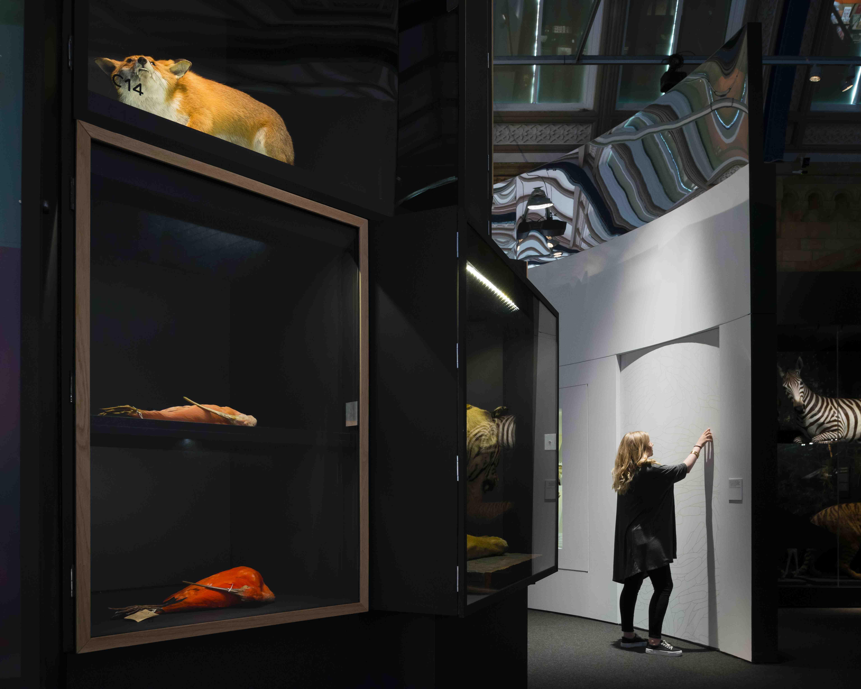 Animal Vision Natural History Museum