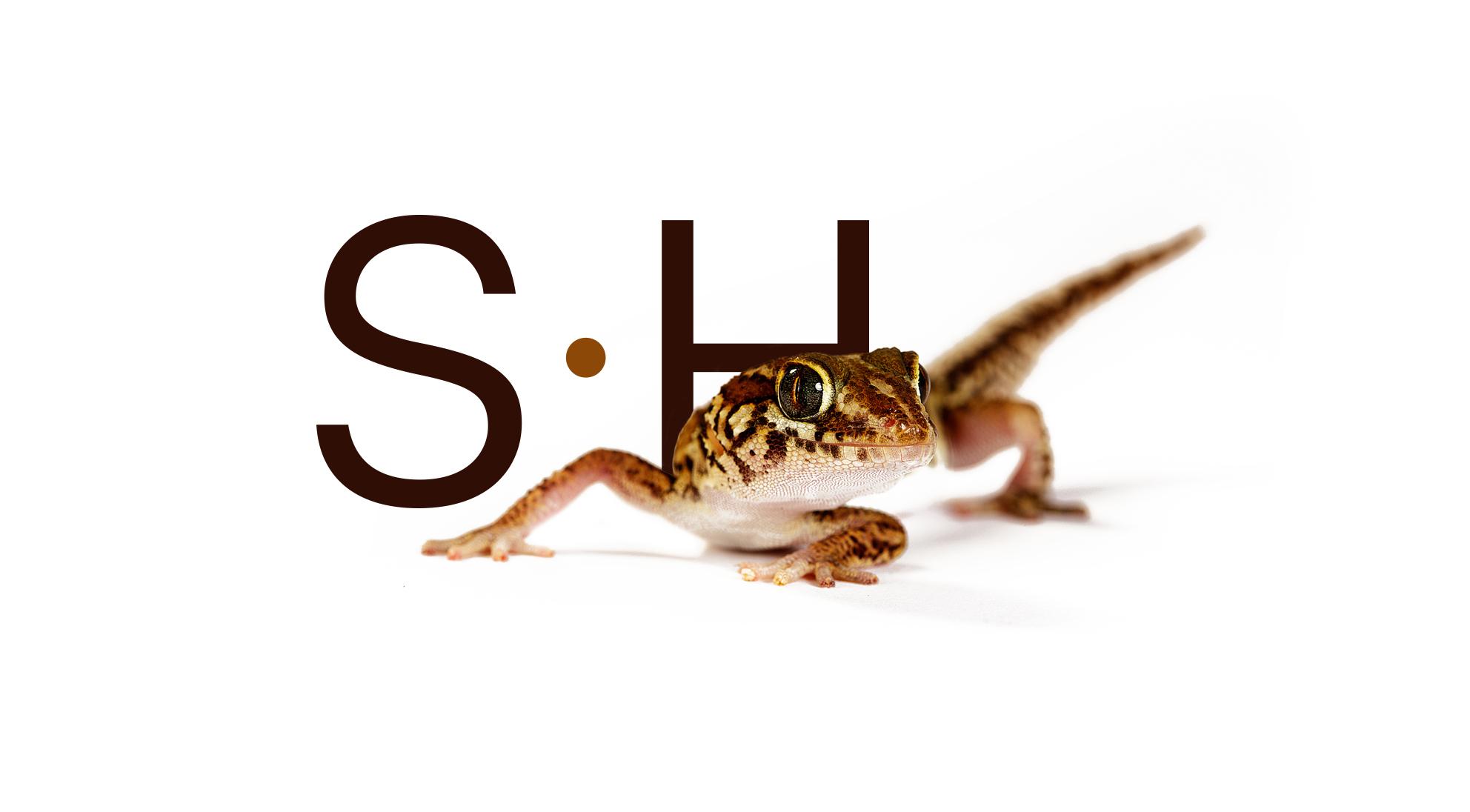 steve-hoskins-lizard