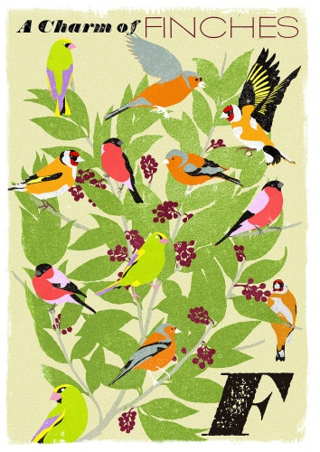 finches-f_collective-nouns-by-minalima