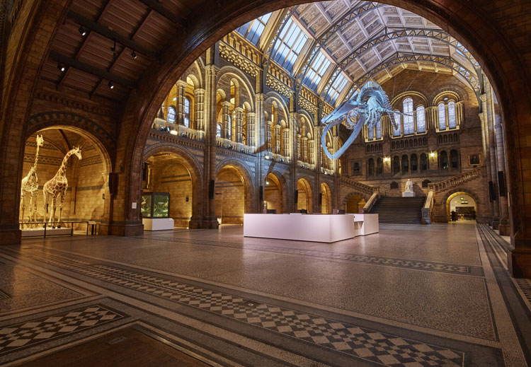 Bye Bye Dippy: Dinosaur replacement unveiled at Natural History Museum