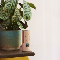 Big Boss Palm branding and packaging, by Ayesha Sherriffs
