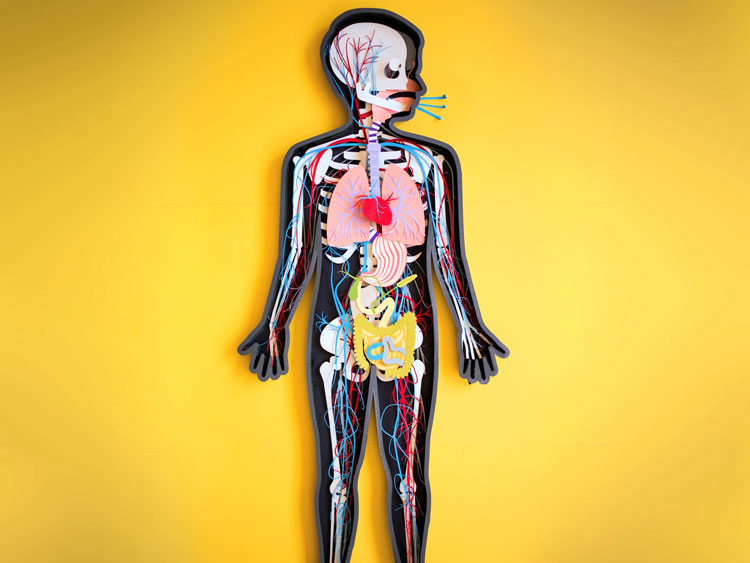 The-Human-Body-artwork-by-Kelli-Anderson-for-Tinybop-4.jpg