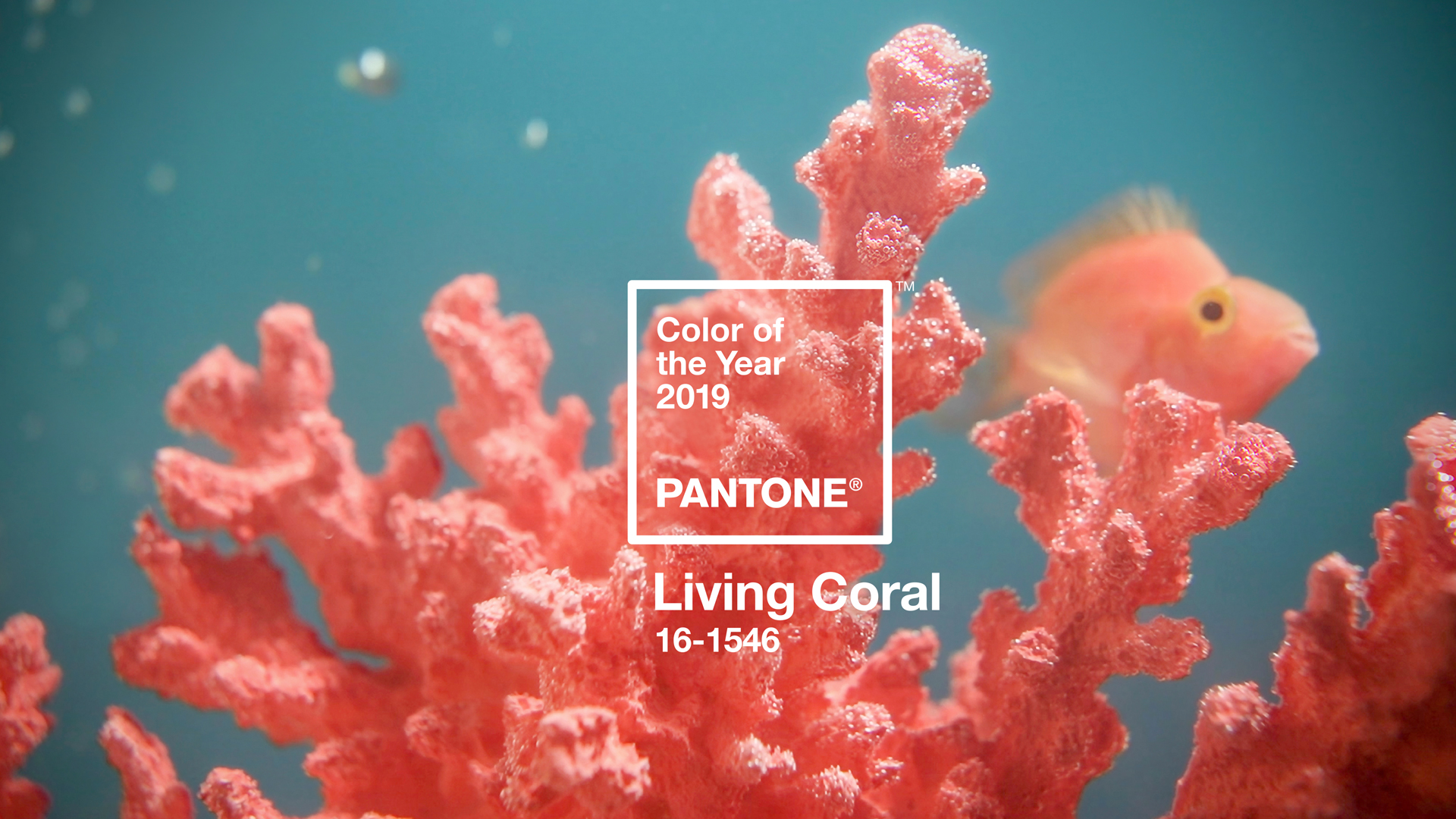 """222f611480c """"Pantone Colour of the Year had better stay away from my electric blue"""""""