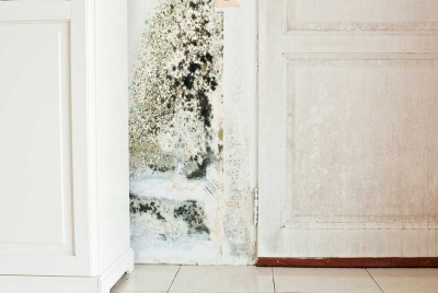 damp mould in a white kitchen