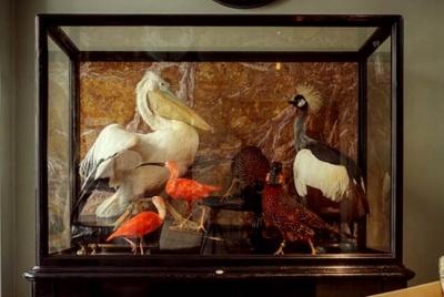 jamb taxidermy pelican