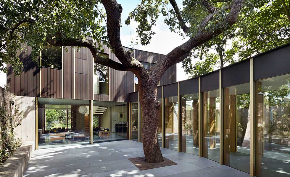 contemporary self build home around a tree