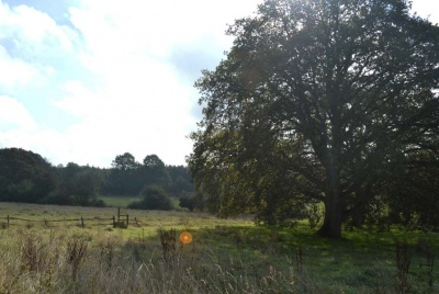 Existing site for a new build sustainable family home in Surrey.