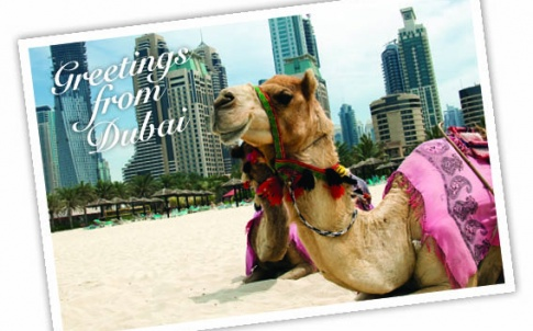 Dubai camel beach postcard