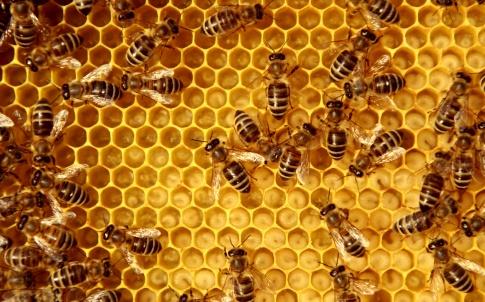 beehive honey