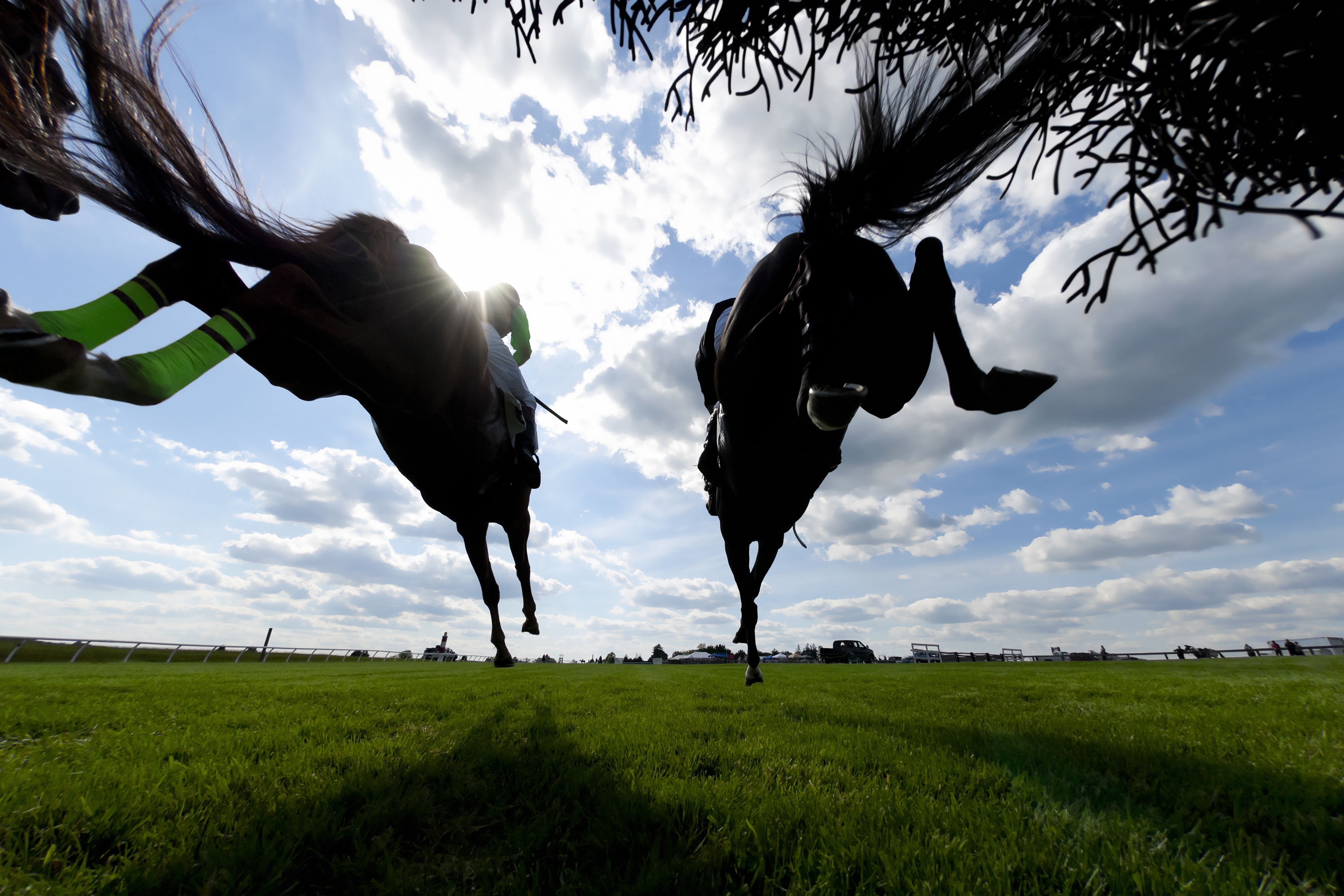 equestrian law, equine law