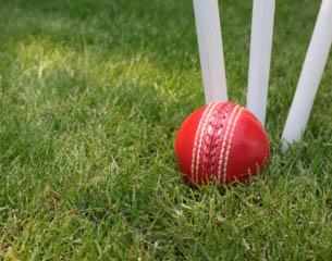 Cricket - thumbnail